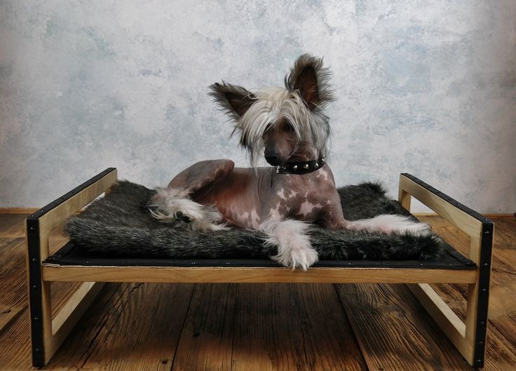 Modern handmade leather dog bed by ooMelampus on Etsy