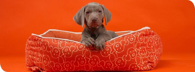 Dog eared - cuteness…and the bed is so sweet.
