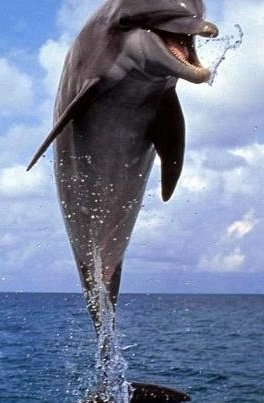 Jumping Dolphin image via Selene on Facebook
