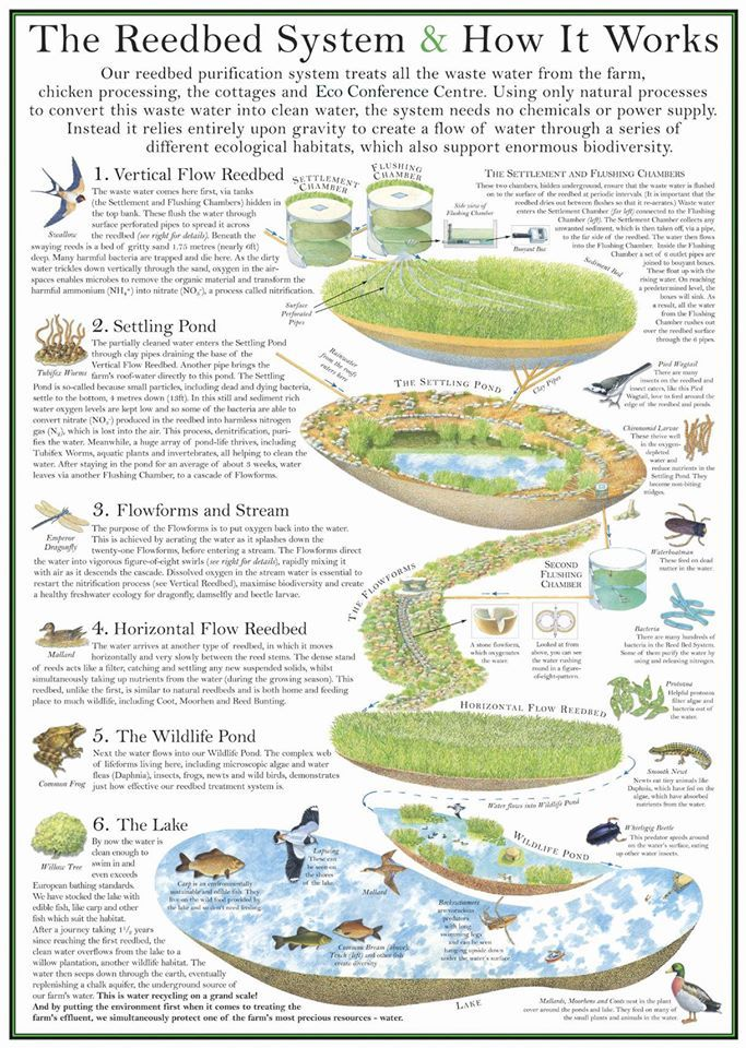 17 best images about natural greywater treatment on for Design of a pond system