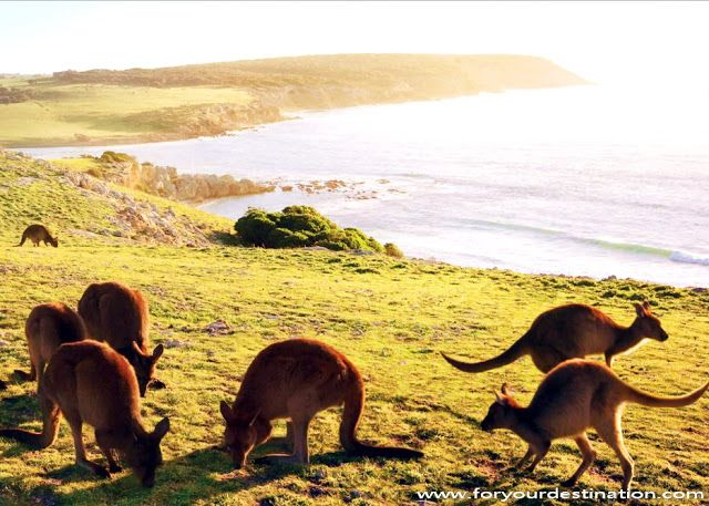 Kangaroo Island Tourist Attractions