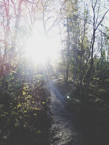 #sunshine #outdoors in the #forest in #polar_day #nature