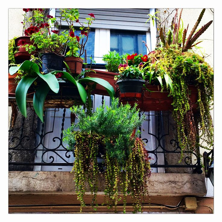 Hanging plants on the balcony in lisbon portugal as - Hanging plants in balcony ...