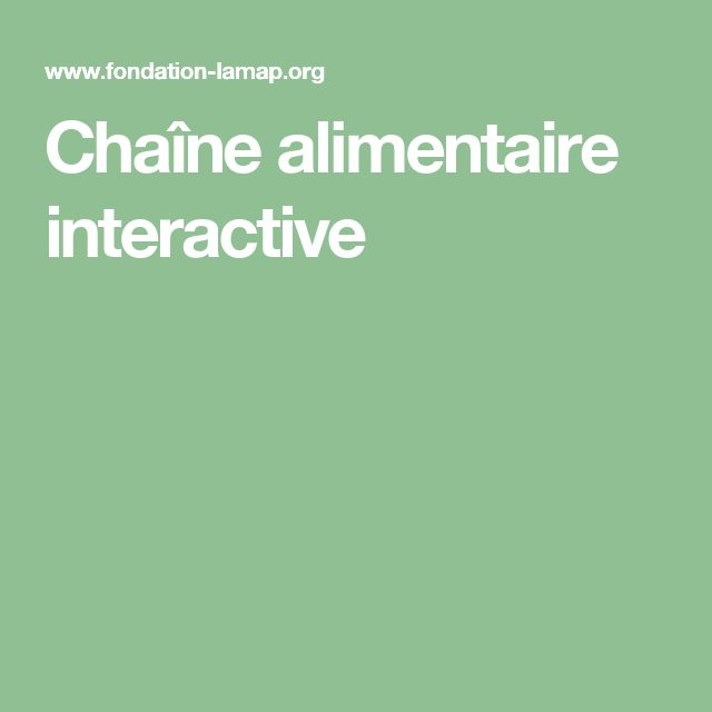 Chaîne alimentaire interactive