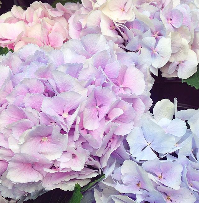 Beautiful hydrangea blooms at the #boroughmarket 🌸💜