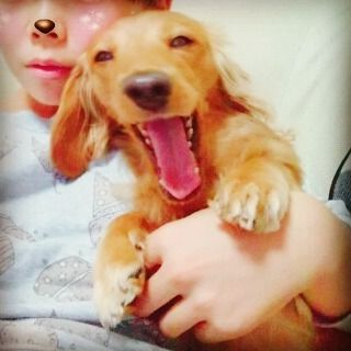 おはモーニング👋😆✨☀ 天然娘の自撮りに付き合わされてるきらちゃんが不敏で、こっそりその光景を撮ってやりました!笑 きらりは飽きてますよ。😒 天然娘にとらわれたきらりなのでしたぁ。。😲 残念。。(/--)/ #ダックス #ダックスフンド #きらり #8才 #dog #dogstagram #doglove #🐶 #doglife #愛犬あるある #捕らわれた犬 #あくび #大切な家族 #愛犬 #犬好きさんと繋がりたい #ふわもこ #自撮り