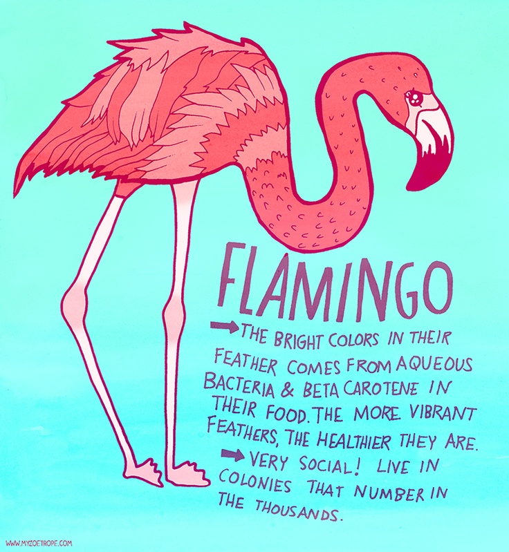 365 Days of Animals by My Zoetrope 088: Flamingo Pen/Ink/Digital