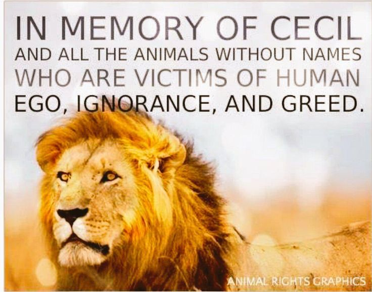 Image result for rip cecil the lion and other animals who killed