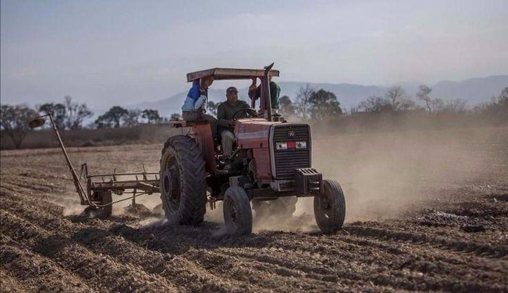 Más de 90 alumnos de la Escuela Agrícola aprenden a sembrar: Son estudiantes del último año. Se plantaron 11 hectáreas de trigo dentro del…