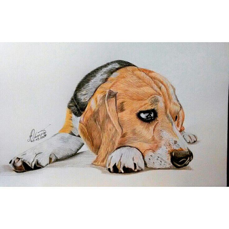 Desenho Realista De Cachorro