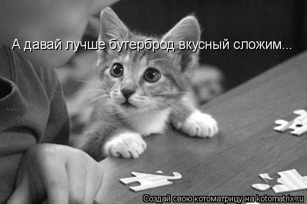 Котоматрица | Смешные фото кошек, Смешные кошки, Я люблю кошек