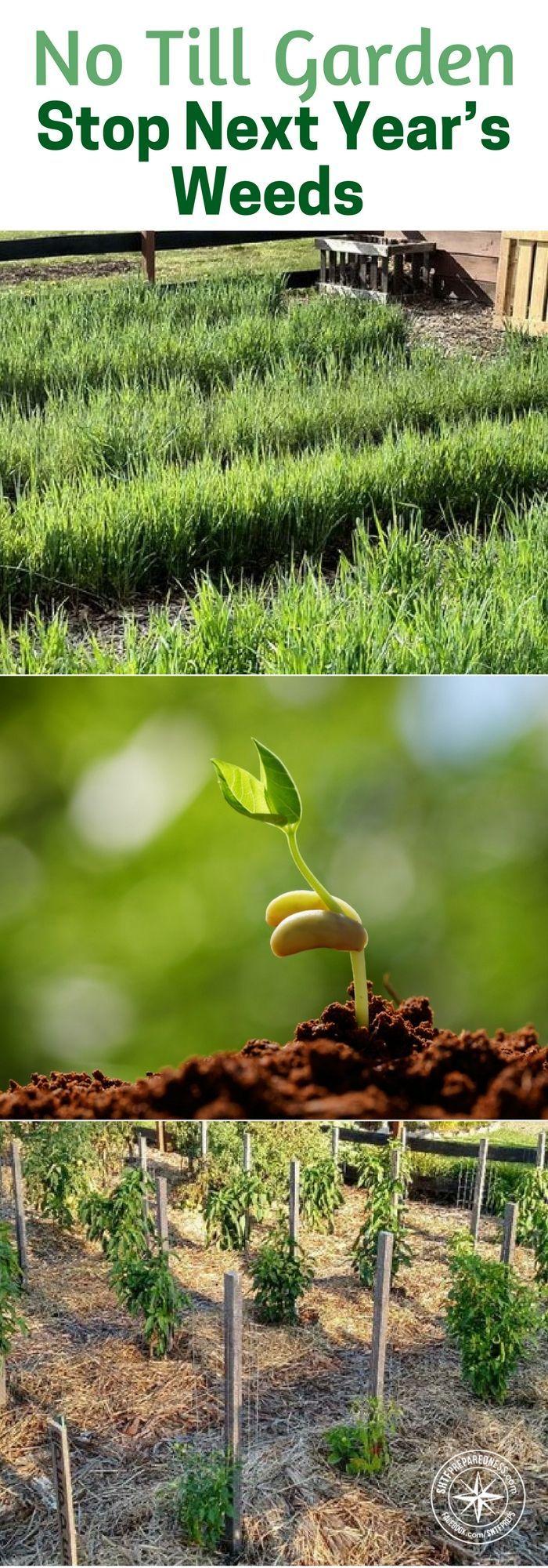 Stop weeds in flower beds - Best 25 Garden Weeds Ideas On Pinterest Garden Ideas To Stop Weeds Insect Repellent Plants And Weeds Vinegar