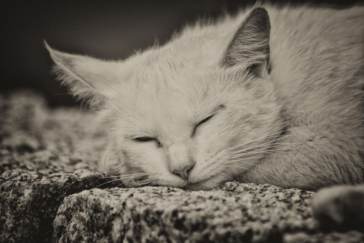 dreaming of a mouse by Marco Melis on 500px