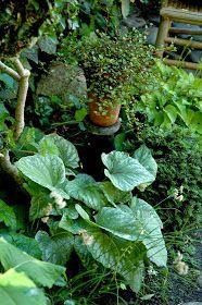 Romantik er vel noget, der kan opstå i haven gennem haveejerens mere eller mindre bevidste planlægning og tilrettelæggelse af haven, m...