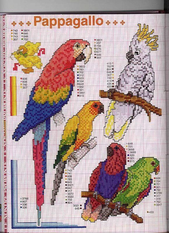 Schema punto croce Pappagalli 1