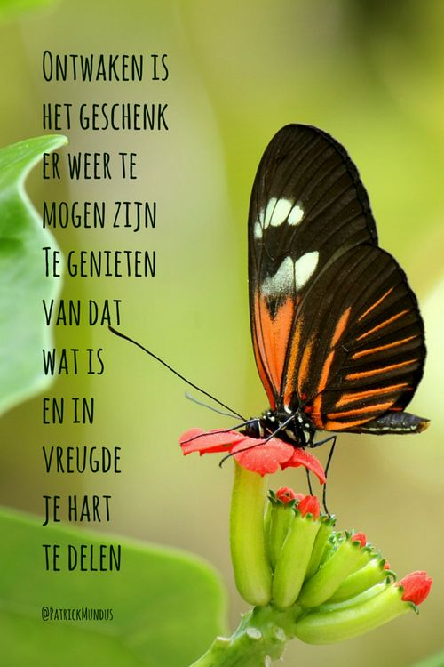 #Ontwaken is het geschenk er weer te mogen zijn, te genieten van dat wat is en in vreugde je hart te delen...
