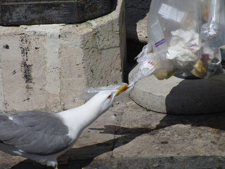 E o lixo, é problema de quem? – Ecóloga Economista