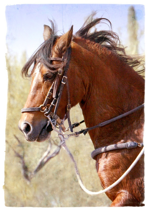 .Cutting western quarter paint horse appaloosa equine tack cowboy cowgirl rodeo ranch show ponypleasure barrel racing pole bending saddle bronc gymkhana