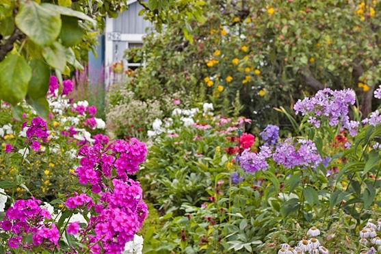 Flowers. Secret garden of Kumpula in Helsinki, courtesy by Conchi Garcia.