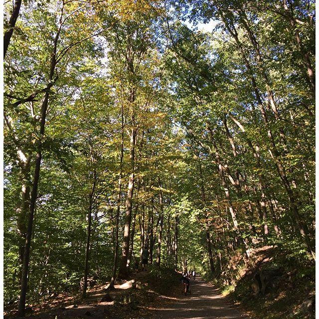 【hi.ransha】さんのInstagramをピンしています。 《#rockefellerstatepark #rockefellerstateparkpreserve #wood#green#yellow#ny #ロックフェラー州立公園#森#緑#黄色#ニューヨーク》
