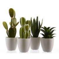 Assorted Artificial Cactus Potted Plant 9cm x 25cm - Homewares