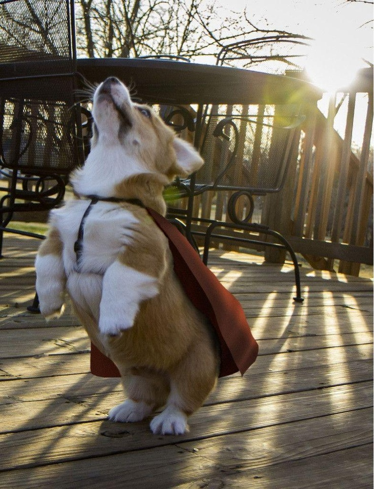 I Must Go! My Planet Needs Me!