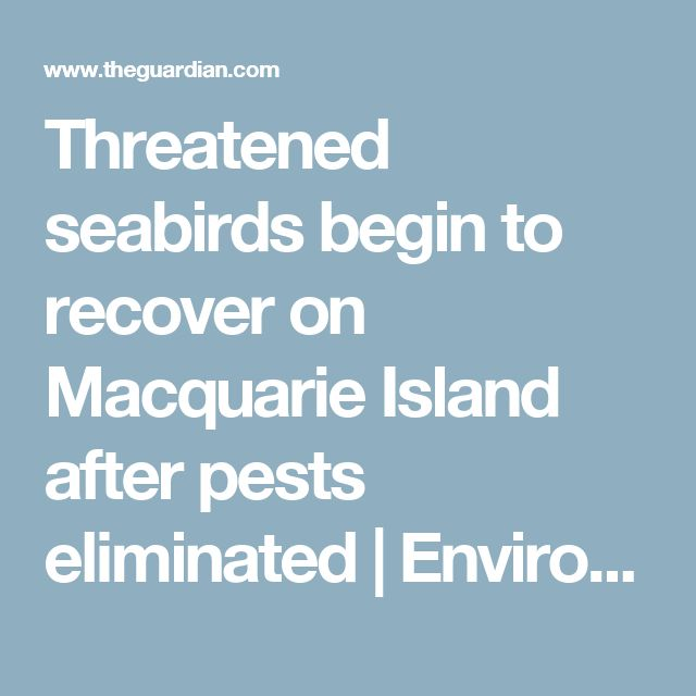 Threatened seabirds begin to recover on Macquarie Island after pests eliminated | Environment | The Guardian