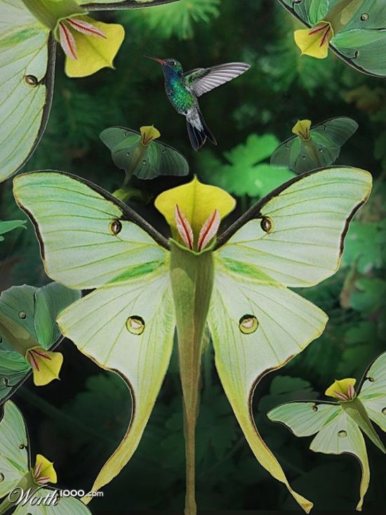pitcher plant looks like a green butterfly