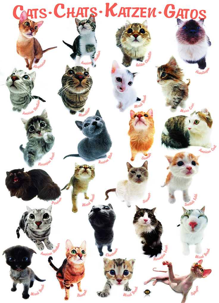 EuroGraphics Cats 1000-Piece Puzzle. This jigsaw puzzle features over 20 cat breeds, all photographed using the Hana-Deka technique, which makes them look very cute and funny.
