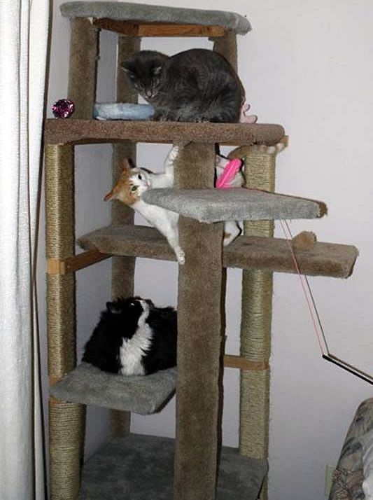 How to make a cat climbing tree without buying any new for Diy cat tree