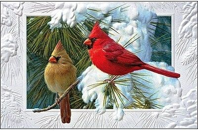 cardinals on snowy branch