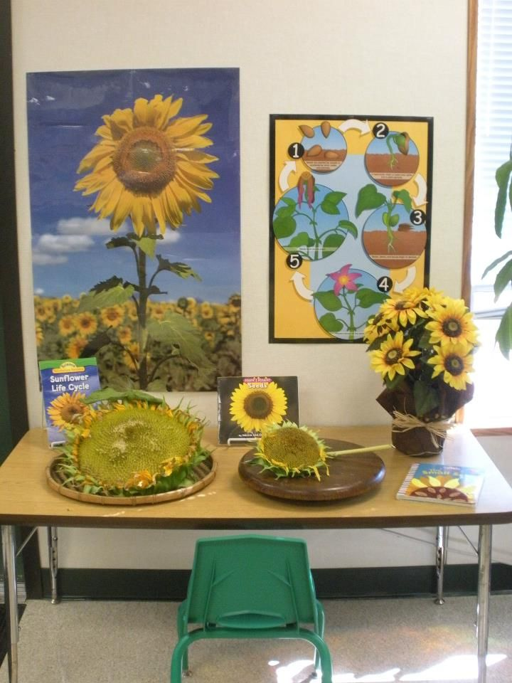 For the Children: Inspired by Nature: For the love of sunflowers