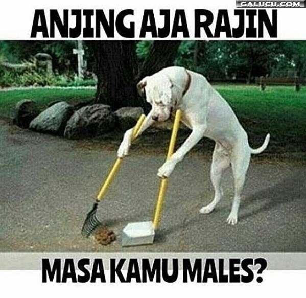 Anjing aja rajin masa kamu males #GambarLucu