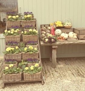Spring produce at Daylesford Farm Shop - primula and pansies, swede, rhubarb and cabbage!