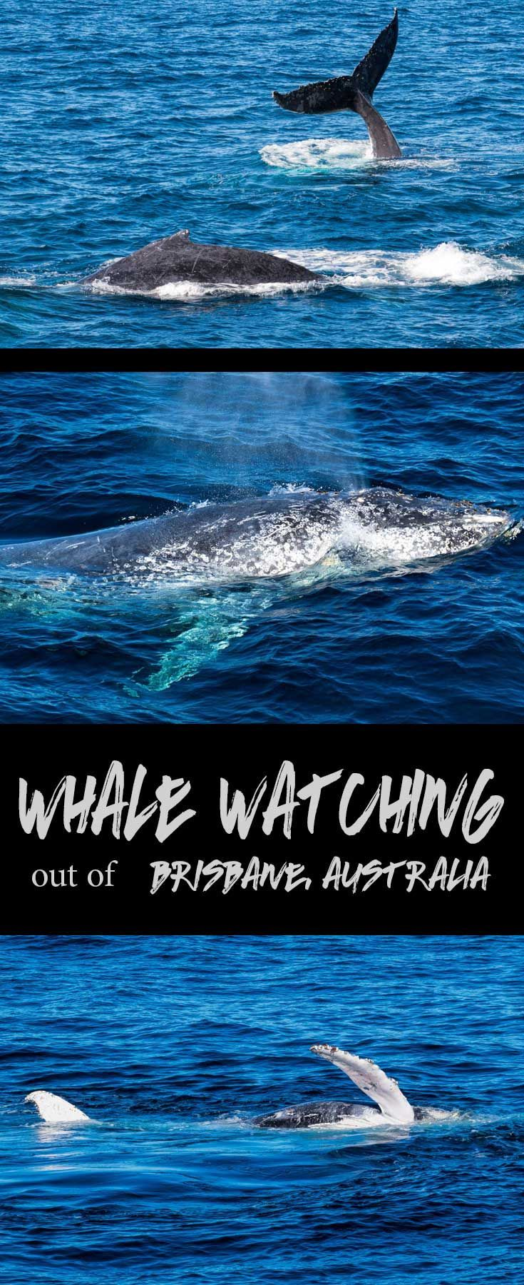 Looking for fun outdoor activities in Brisbane this winter? Consider a whale watching cruise on Morton Bay as the whales cruise past on their annual migration path.