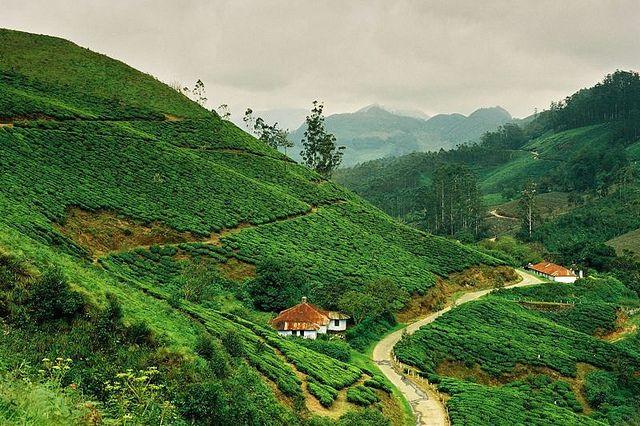 Tea Plantation in Munnar | Flickr - Photo Sharing!