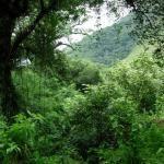 Ambiente continúa con los proyectos de conservación de los bosques nativos