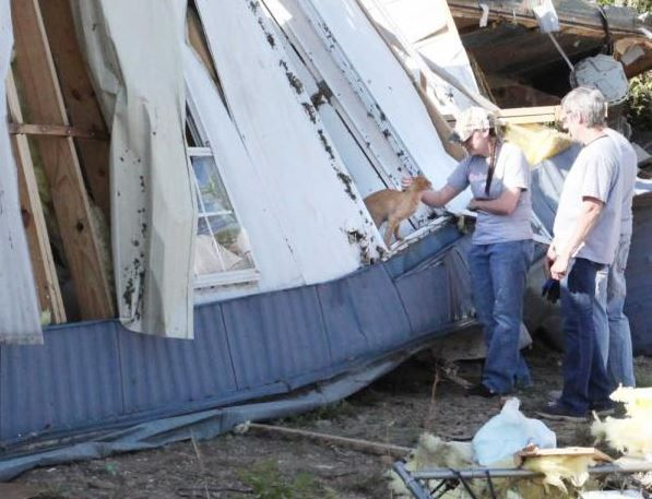 Cat Greets Searchers in Arkansas Tornado Disaster Zone