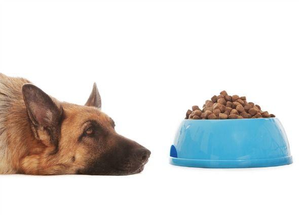 Aspirin Poisoning In Dogs
