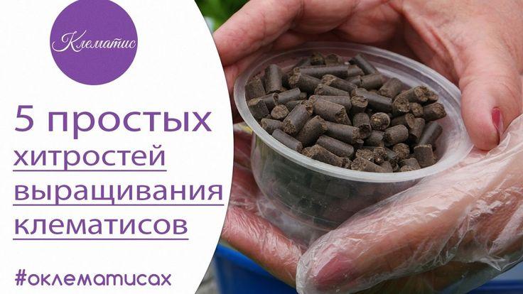 5 простых хитростей при выращивании клематисов от Нины Петруши и канал...