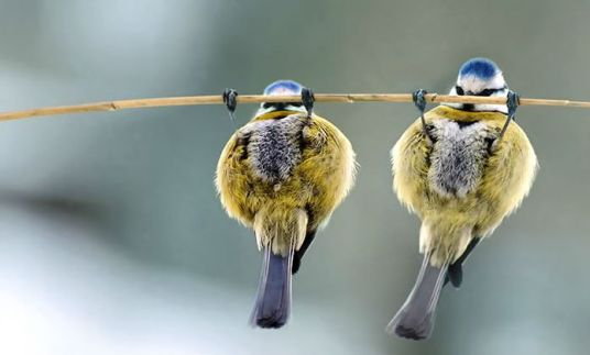 """k-eke: """"More little animations I made that illustrate some funny photos of birds…"""