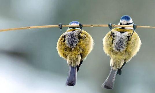 오늘의유머 - 진짜 웃긴 동물 움짤 블로그 찾았써요ㅋㅋㅋ(데이터터짐주의)