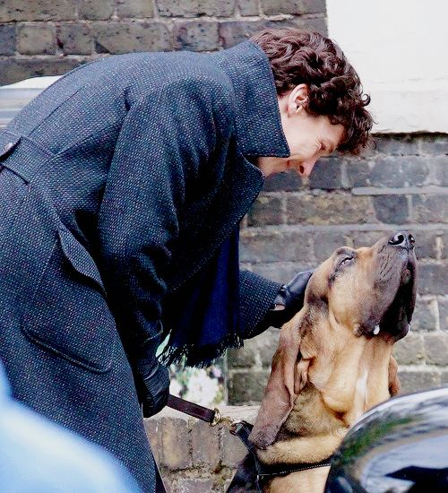 """Benedict Cumberbatch on set of Sherlock series 4 - Dollars to donuts this is """"Toby"""" from the Conan Doyle canon.  We're gonna get all the Redbeard feels!"""