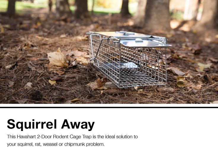 Havahart small 2door rodentsquirrel cage trap at lowes