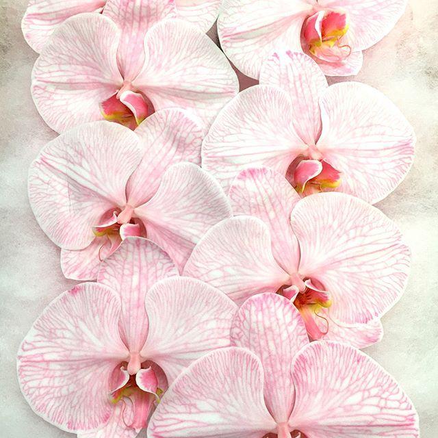 """Friday Dyed Phalaenopsis 🙈🙉 @sydneyflowerworld 🌸🌏 #wholesale #dyedorchids #phalaenopsis #orchids #dyed #colours #weddingflowers #weddingideas #weddedwonderland #fridayflowers"" by @sydneyflowerworld. #bridalstyle #weddingfashion #weddingdream #weddingidea #bridalinspiration #bridalinspo #rusticwedding #невеста #prewedding #bridalgown #bridaldress #свадебноеплатье #vestidodenoiva #couture #gelinlik #gown #weddingtime #theknot #engagement #weddinghair #brides #stylemepretty…"