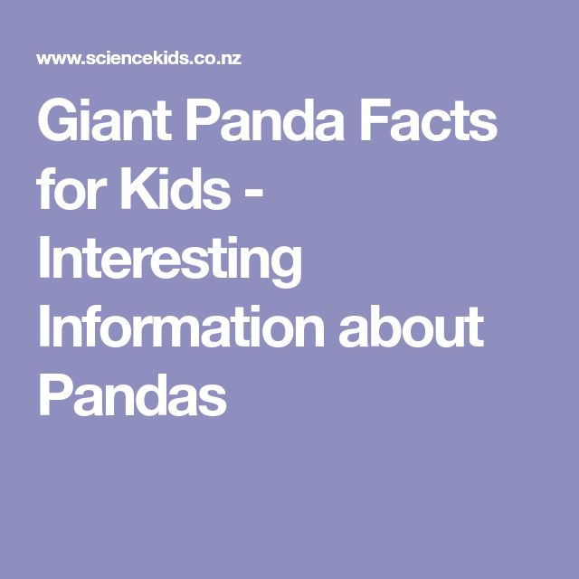 Giant Panda Facts for Kids - Interesting Information about Pandas