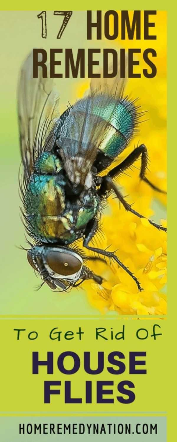 How to Get Rid of House Flies in the House? Here are some Amazing Home Remedies to Trap them and Kill them on your own. These remedies are Natural and Safe.