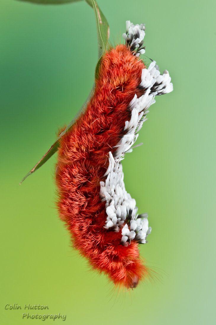 224 best caterpillars images on pinterest caterpillar