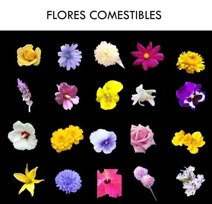 Flores comestibles p talos que se comen y se utilizan - Flores para cocinar ...