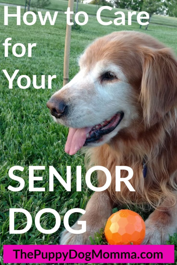 See the special care your dog needs as they enter their